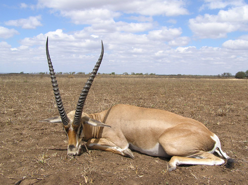 on... Gazelles and other animals